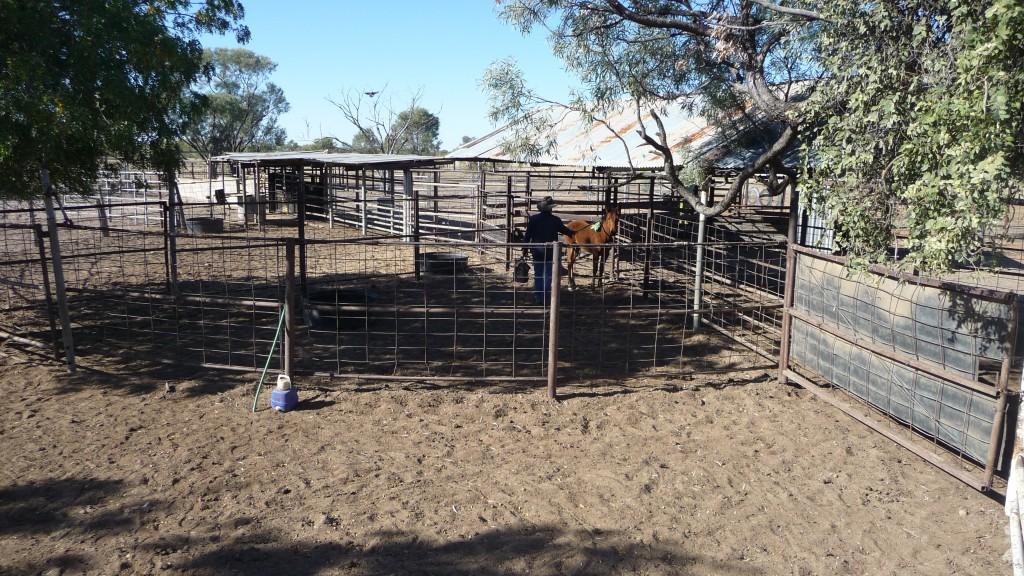 L'homme qui murmurait à l'oreille des chevaux - Outback Australie