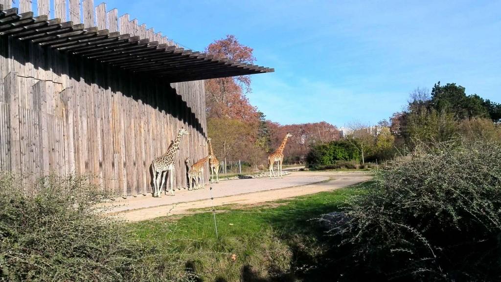 Zoo gratuit à Lyon