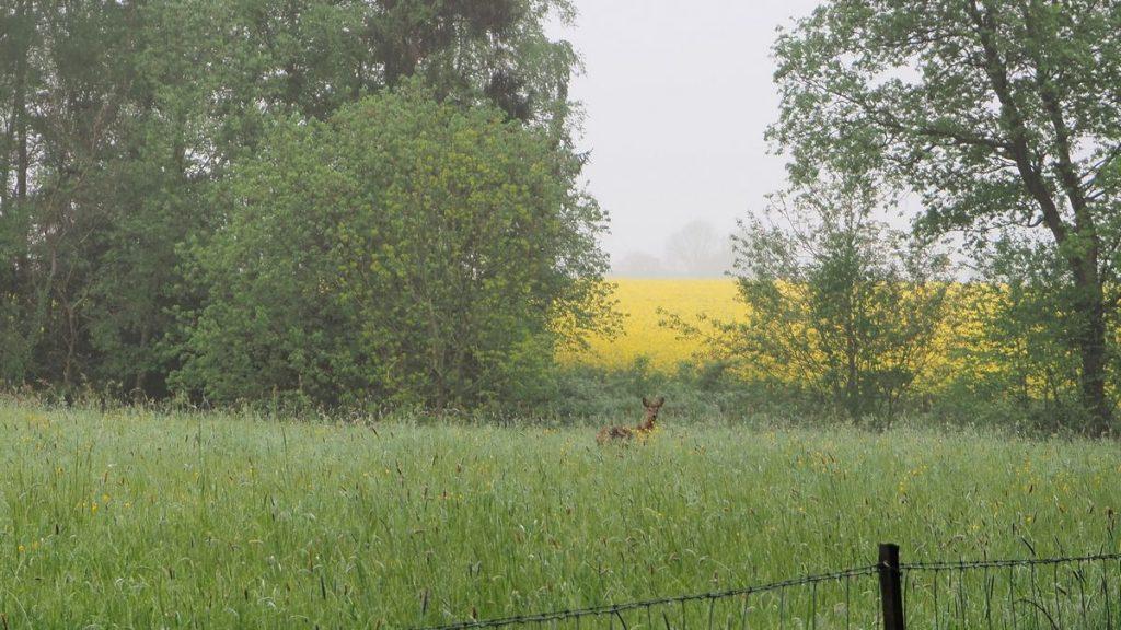 Nature en Belgique