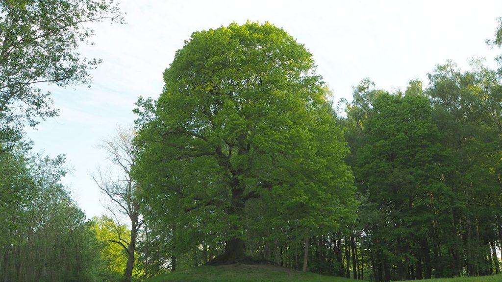 Bois de Mons