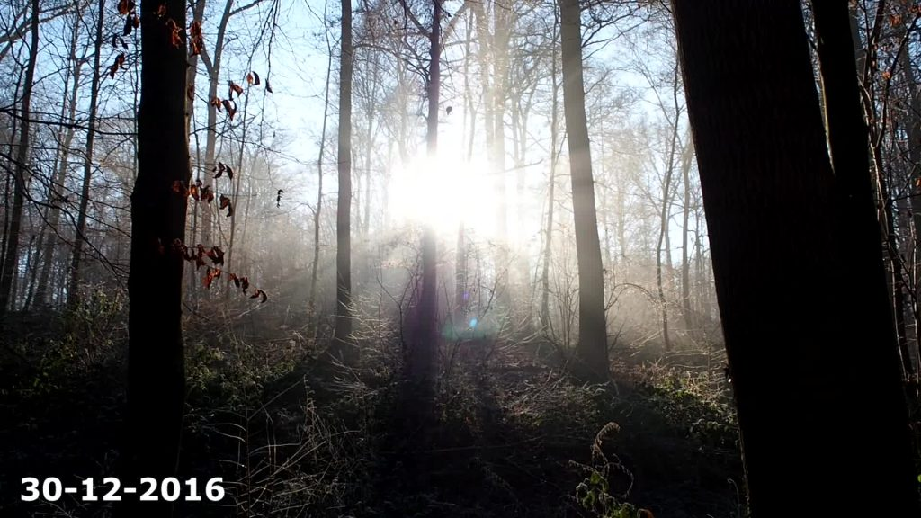 projet video 365 - foret
