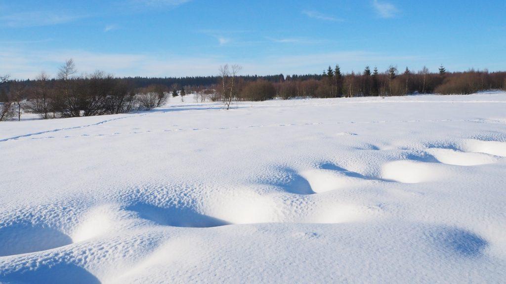 L'hiver dans les Hautes Fagnes Belgique