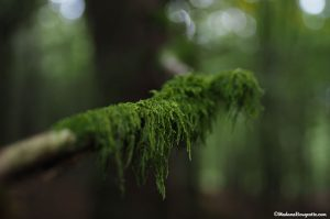Ardenne Nature