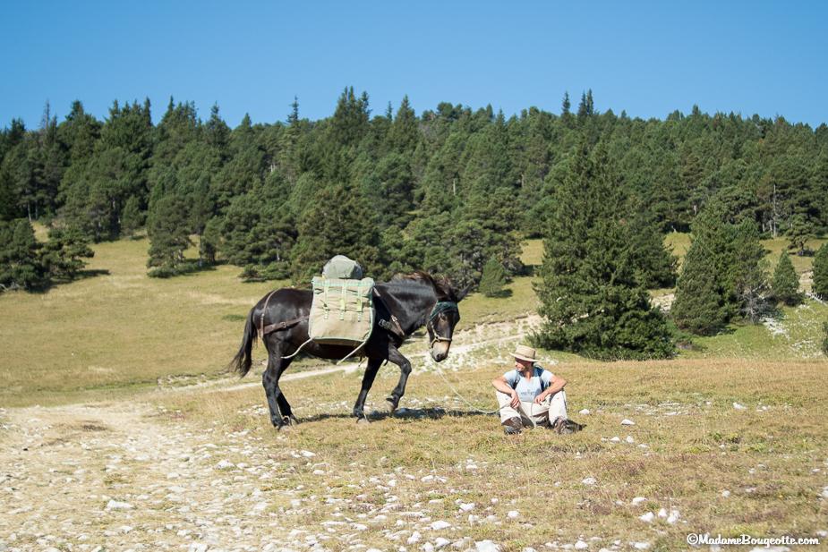Vercors randonnée avec un âne