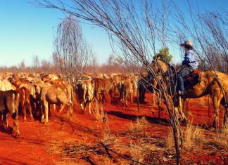 Vivre l'Outback australien