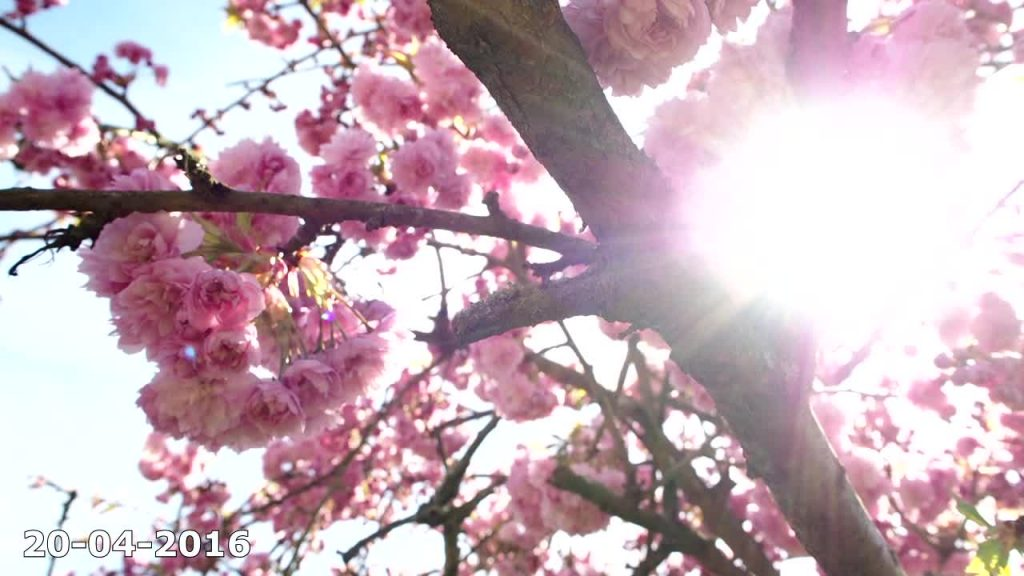 Projet 365 : Le printemps