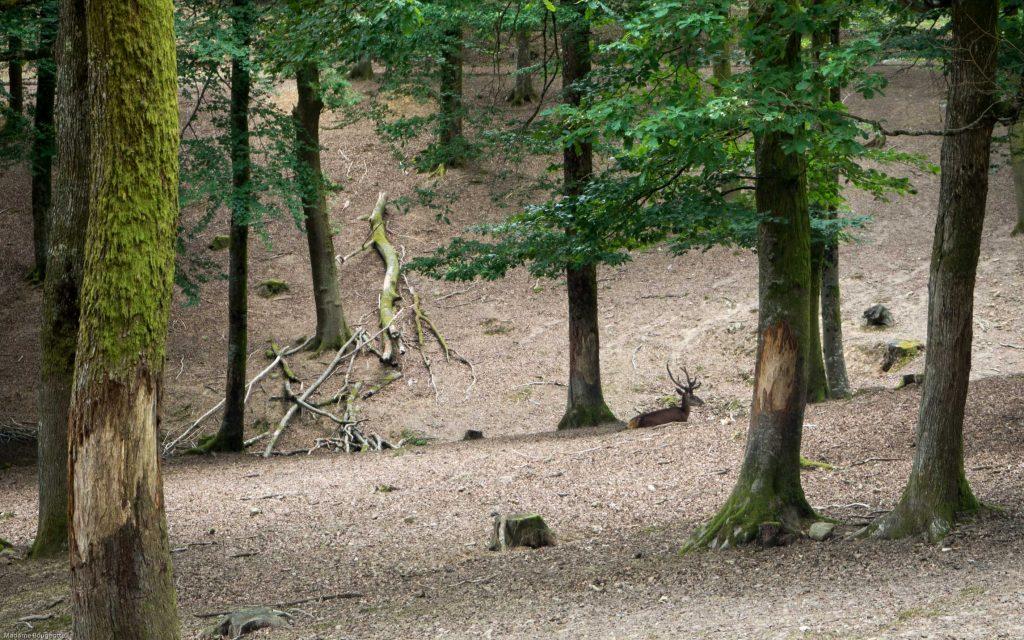 Parc Saint Valbert à Fougerolles