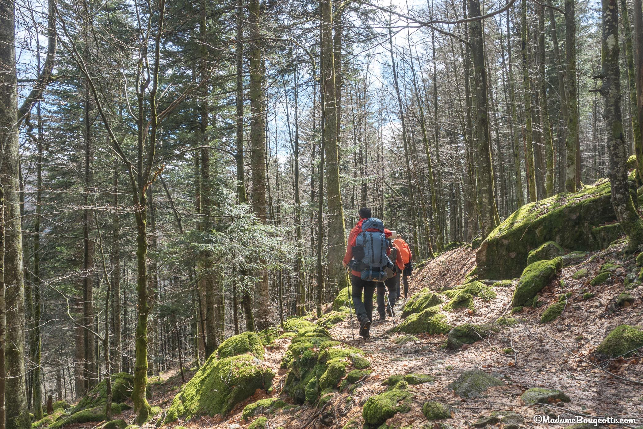 Trek - Vosges