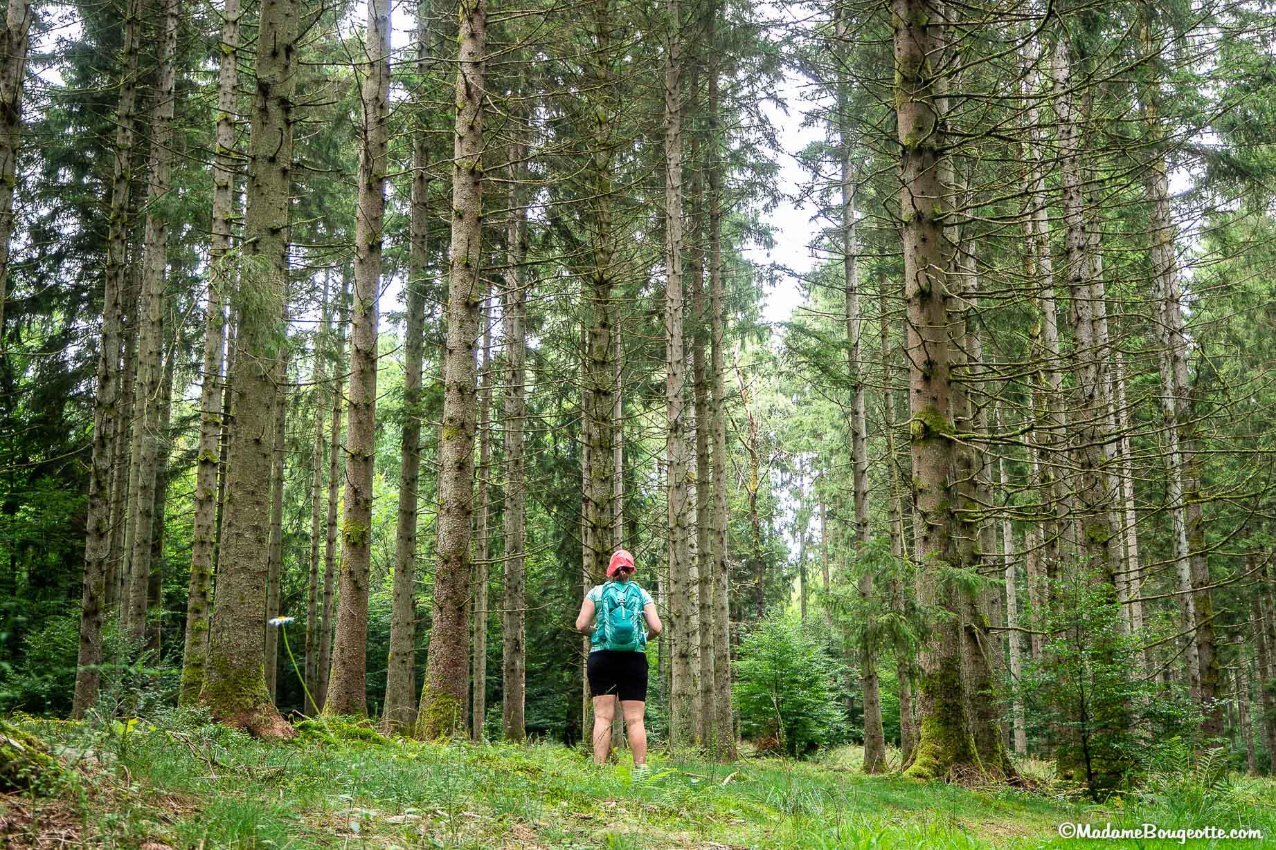 belle randonnée Belgique - forêt d'Anlier
