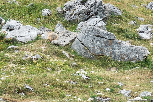 Vercors randonnée marmotte